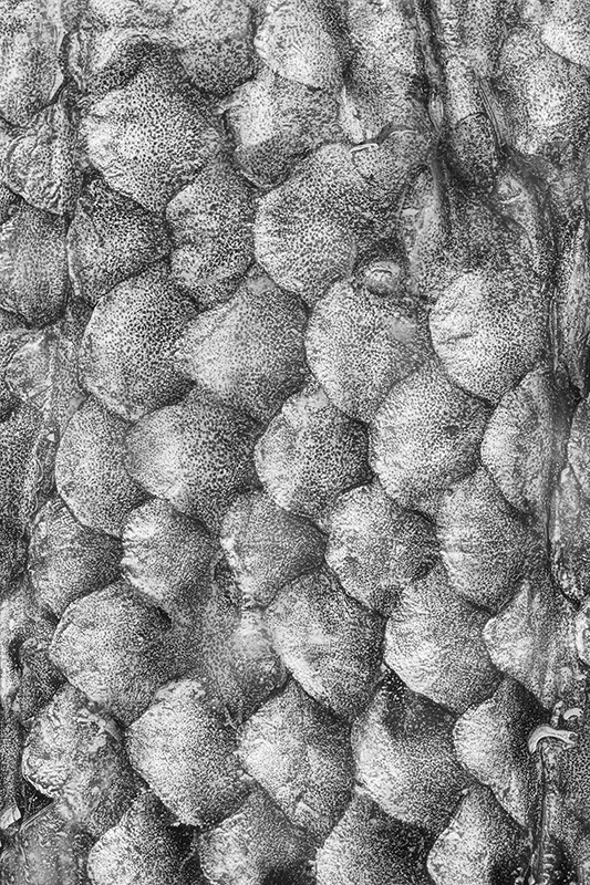 Fish Scales in Black & White © Harold Davis